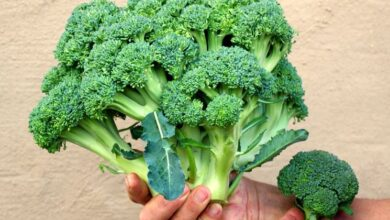 Photo of Come piantare i semi di broccolo: come conservare i semi di broccolo in giardino
