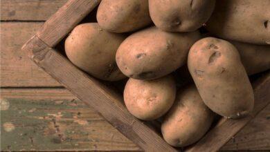 Photo of Conservazione delle patate dopo la raccolta: come conservare le patate nell'orto