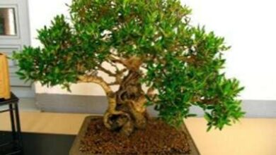 Photo of Cosa fare con il tuo primo bonsai?