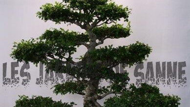 Photo of Nozioni di base sul bonsai: informazioni sui metodi di potatura del bonsai