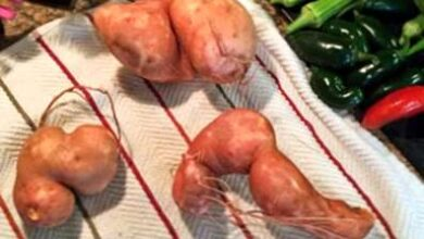 Photo of Patate deformate con nodi: perché i tuberi di patate sono deformati?