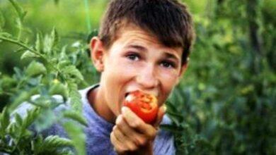 Photo of Perché i pomodori hanno un sapore aspro o amaro – Come curare il sapore amaro del pomodoro