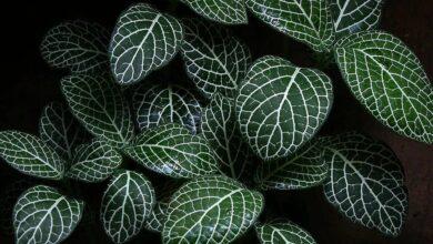 Photo of 23 piante d'appartamento a bassa luminosità, di facile manutenzione e (quasi) impossibile da uccidere