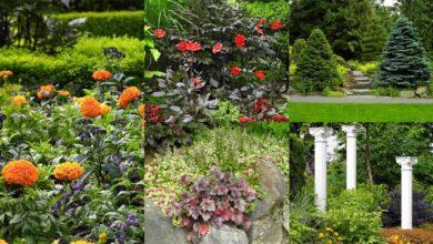Photo of 30 bellissime piante per arricchire il vostro giardino