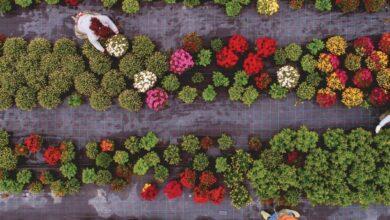 Photo of 7 motivi importanti per piantare i semi del patrimonio culturale nel vostro giardino