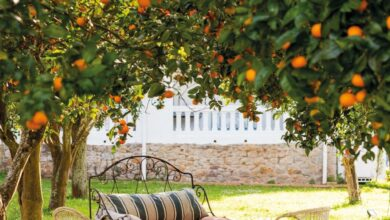 Photo of Alberi da frutta Patio