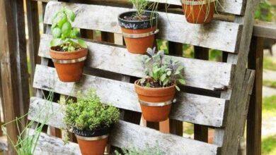 Photo of Come creare un giardino verticale fai da te (e 7 idee da provare)