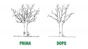 Photo of Come potare gli alberi