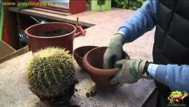 Photo of Come prendersi cura di una pianta di cactus