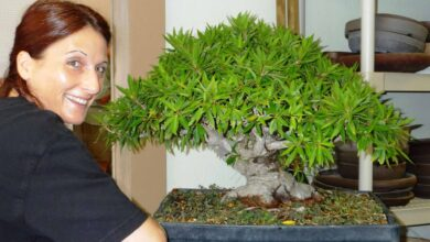 Photo of cura del bonsai