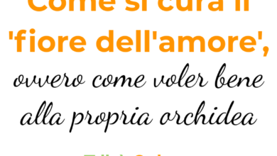 Photo of Cura dell'amore in vaso: come far crescere l'amore in un vaso