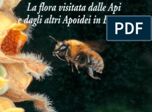 Photo of Dodonaea viscosa, un arbusto capace di ripristinare i terreni impoveriti
