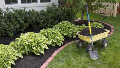 Photo of Fare il concime per il vostro giardino