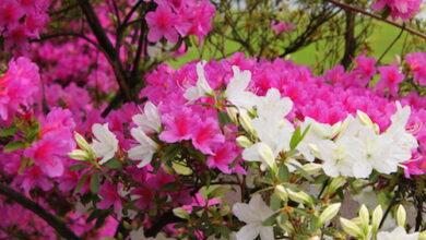 Photo of Il significato di piante e fiori
