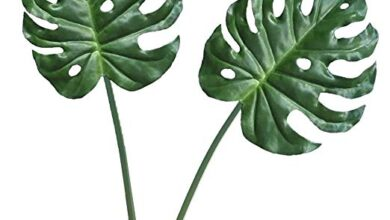 Photo of Monstera deliciosa Falso filodendro