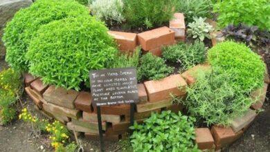 Photo of Progettare un giardino di erbe aromatiche – Scegliere un sito per il tuo giardino di erbe aromatiche