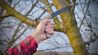 Photo of Quando tagliare i cespugli e 6 consigli importanti per farlo bene