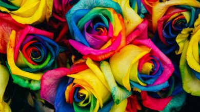 Photo of rose arcobaleno: sono vere?