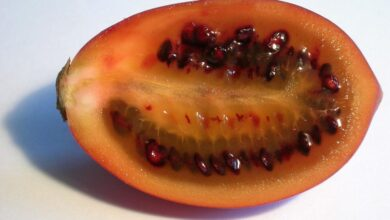 Photo of Tomate arboricole, Tamarillo
