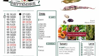 Photo of Calendario agricolo a settembre
