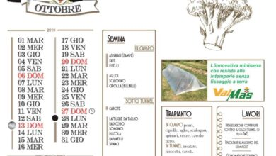Photo of Calendario agricolo in ottobre