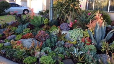 Photo of Giardini con succulenti e cactus