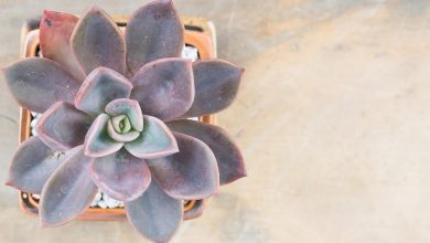 Photo of Piante succulente colorate