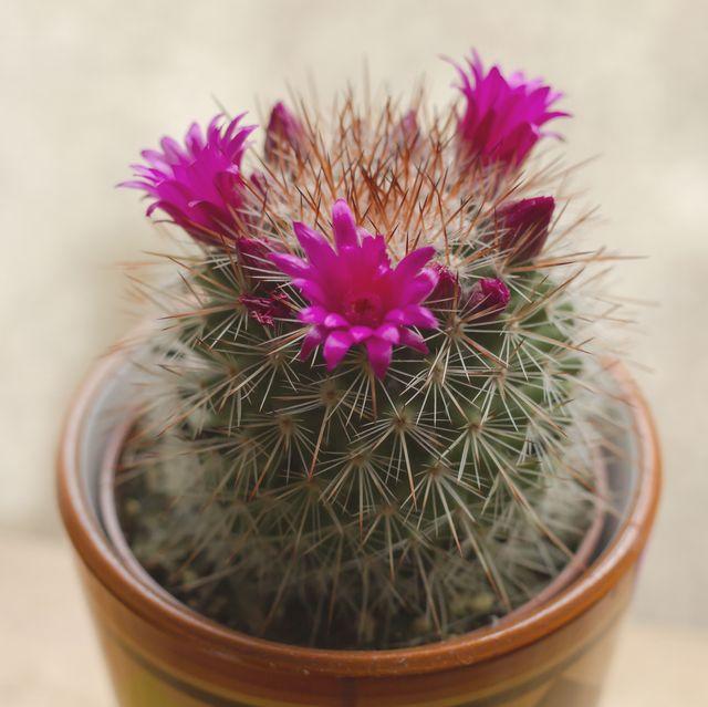 8 cose che potresti non sapere sulle piante di cactus