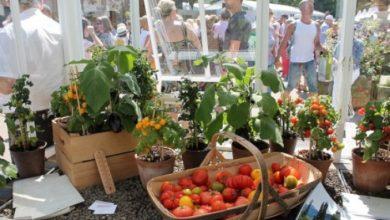 Photo of Chelsea Flower Show: nuevas ideas para recipientes del huerto urbano