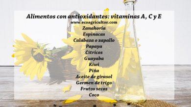 Photo of Antiossidanti: cosa sono, funzioni e migliori alimenti ricchi di antiossidanti