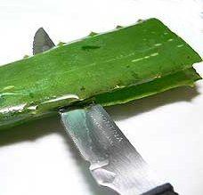 Photo of Come fare gel di Aloe Vera, sapone e altri preparati terapeutici fatti in casa