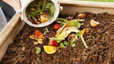 Photo of Compost e compost in giardino
