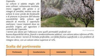 Photo of La gestione delle piante avventizie o indesiderate in agricoltura biologica