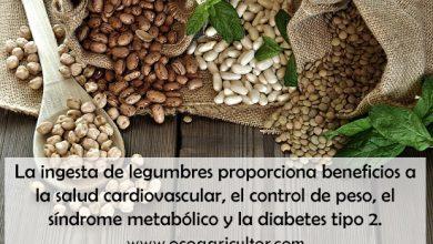 Photo of Propiedades nutricionales y tipos de legumbres más comunes