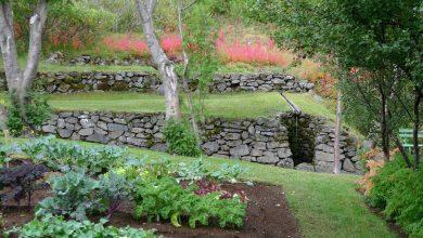 Photo of Piante azotofissatrici per l'orto o il giardino biologico