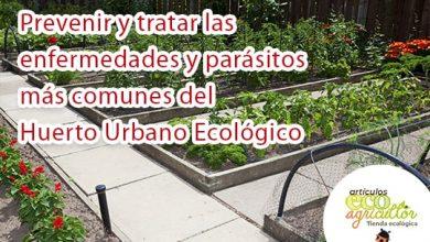 Photo of Scopri come prevenire e curare le malattie e i parassiti più comuni dell'orto biologico