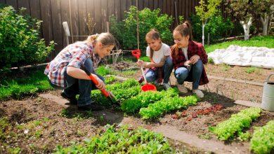 Photo of Preparazione e manutenzione del terreno per coltivare un orto biologico