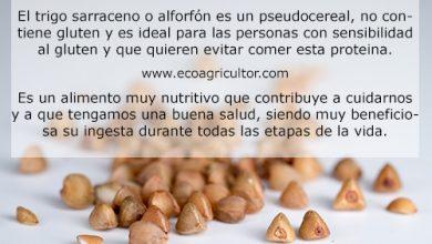 Photo of Grano Saraceno o Grano Saraceno: valori nutrizionali e benefici del consumo di questo pseudocereale senza glutine